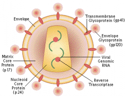 Picture of HIV Virus
