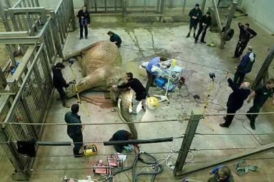 Elephant anaesthesia