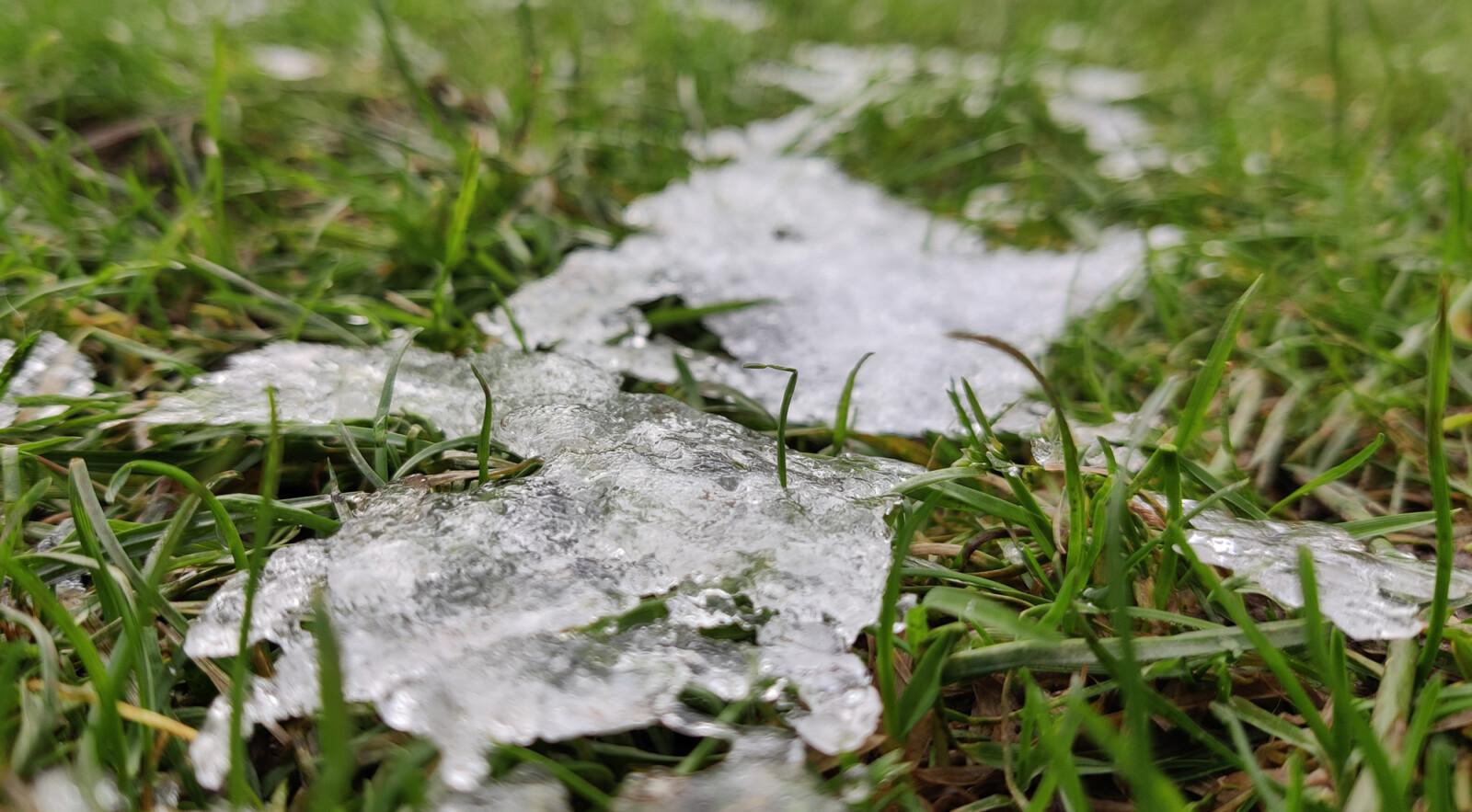 Snow melting on grass